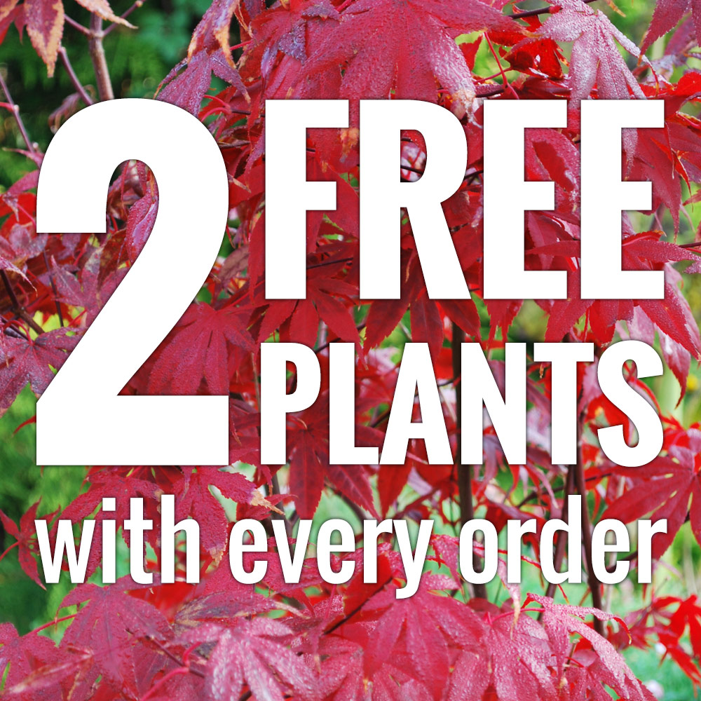 Two free plants with every order