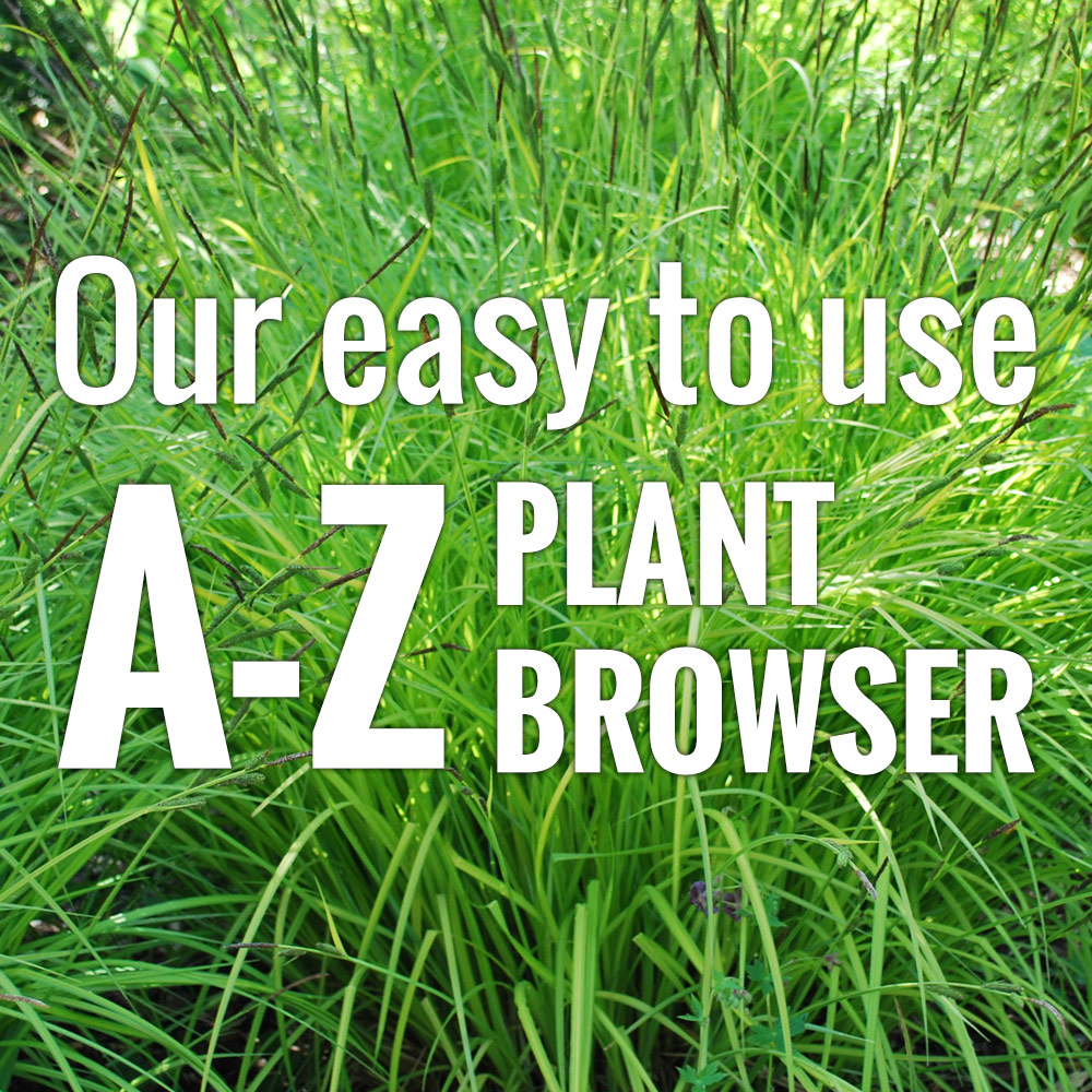 A to Z plant search system